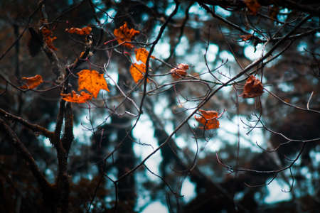 Trees with yellow leaves in autumn season, landscape photography Foto de archivo