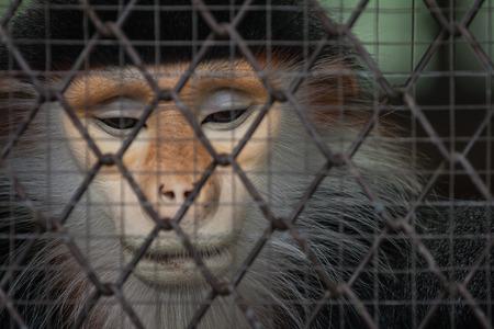 Sad monkey behind the cage photo