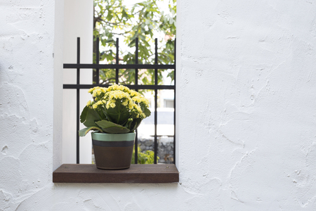 Flower on the window Stok Fotoğraf
