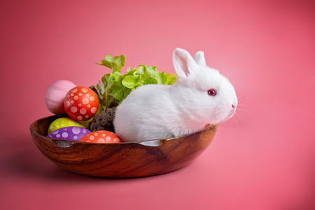 Happy Easter Day. White bunny on pink background. Rabbit with colorful Easter eggs in a wooden tray decorated with vegetables. Cute Easter bunny rabbit with painted Easter eggs on wood background.