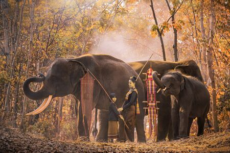 Two beuty women are preparing to travel. Mother and daughter are raising elephants. with elephants is the background. Krapho, Tha Tum District, Surin, Thailand. Jan 9, 2019
