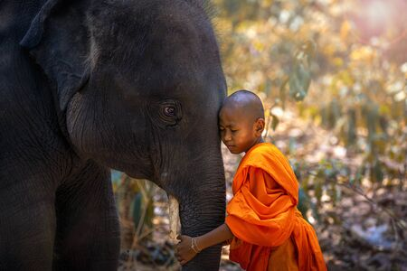 Novices or monks hug elephants. Novice Thai standing and big elephant with forest background, Tha Tum District, Surin, Thailand. Stock Photo
