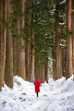 Togakushi Shrine, a girl holding a red umbrella in the pine forest of the temple. Archivio Fotografico
