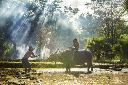 Rolnicy pod prysznicem bawoły i dzieci po orce. Sposób życia mieszkańców Azji Południowo-Wschodniej spacerujących po wiejskich polach ryżowych, prowincja Sakon Nakhon, Tajlandia.