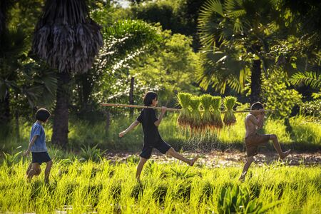 Three boys and girls playing in the fields during the farming season. The way of life of Southeast Asian people walking through rural areas rice fields, Sakon Nakhon Province, Thailand.