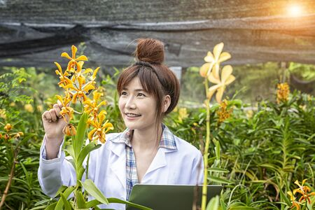 Science scientists are studying orchids and she holding a computer in an orchid garden. Botanical research researchers, orchids, wearing a scientists shirt. Stockfoto