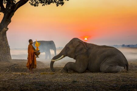 Elephant made merit a monks bowl. Thai people and elephant jointly give alm to monk. elephant and Monk in forest. vintage style. The activities at Krapho, Tha Tum District, Surin, Thailand.