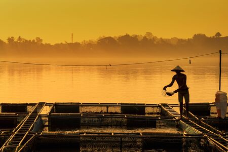 Fisherman feeds the fish in a commercial farm in Mekong river. Farmers feeding fish in cages, Mekong River. The Tilapia for feeding fish in northeast of Thailand.