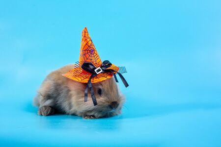 A rabbit wearing a halloween hat. Little rabbit wearing orange witch hat for Halloween night on blue background.
