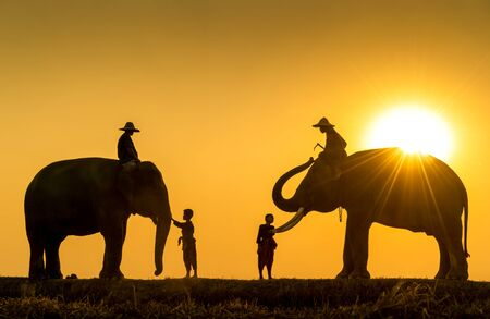 New generation mahout. Two boy and Two mahout and two elephant with sunset light as a backdrop. The activities Krapho, Tha Tum District, Surin, Thailand.