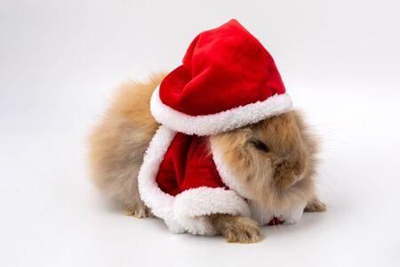 Merry Christmas and Happy Holidays. Rabbit wearing Santa Cross dress. Brown rabbit on white background. Cute Brown baby bunny on white background. Stock Photo