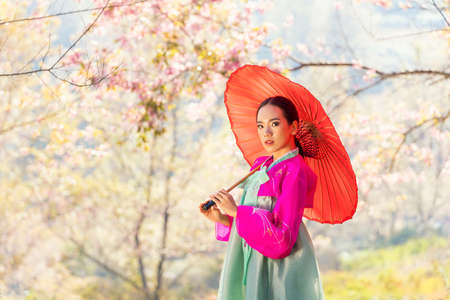 Korean girl wearing a hanbok wearing a red umbrella. Beautiful Female wearing traditional Korean hanbok with cherry blossom in spring, Korea. Asian woman tourists. Stockfoto