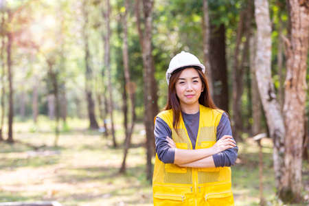An engineer working in the forest. Forest worker supervisors are constructing roads in the forest. Banque d'images