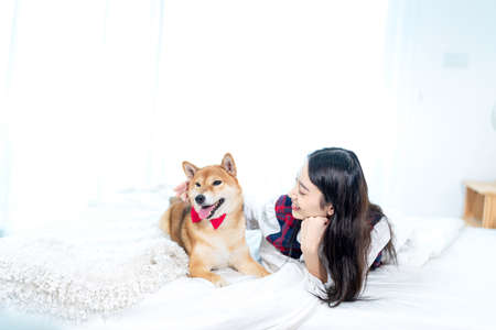The dog is laying with the woman smiling on white bed in bedroom. Shiba inu in japanese bedroom. Stockfoto - 152217196