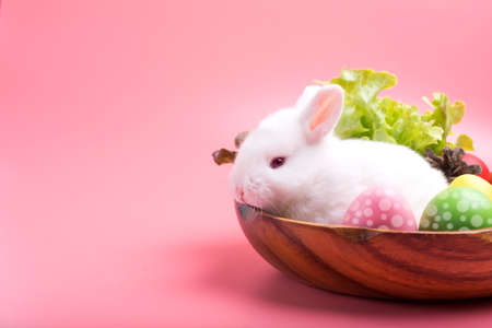 A white rabbit on a wooden tray with vegetables and Easter eggs on the pink background Stockfoto