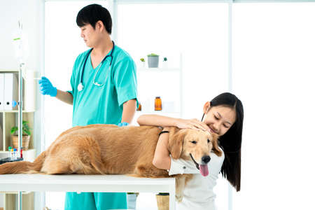 Dog owner is embracing the Golden Retriever dog in a veterinary clinic where the doctor is giving salt water Stockfoto - 152554716