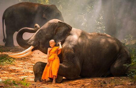 Novices or monks and Two elephants. Two novices sit and talk, and a large elephant with forest background, Tha Tum District, Surin, Thailand Stock Photo