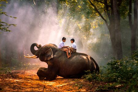 Students are reading books with elephants in the forest. The love of a boy and his pet. Brother teaches brother.
