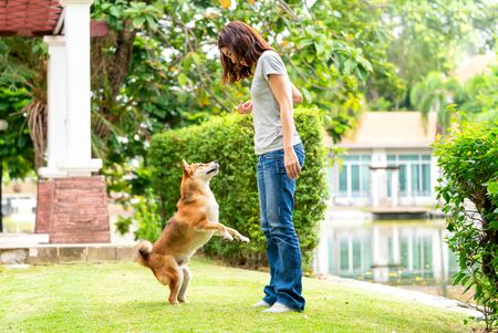 Young female and dog summer concept. The girl plays with the Shiba Inu dog in the backyard. Asian women are teaching and training dogs to greet by shake hands. Foto de archivo