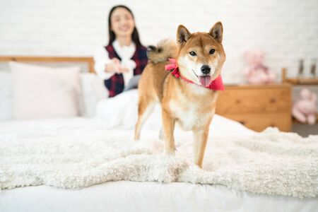 Pet Lover. Shiba Inu dog and Asian woman in the bedroom. Girl and dog in home.