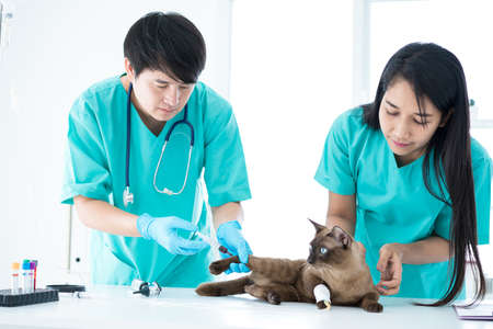 Veterinary concept. Veterinarian is doing syringe to check for blood. Analyze healthy of cat. Patients are vaccinated.