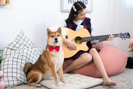 Girl playing guitar with Shiba Inu dog in white living room. Young woman playing with shiba inu dog.