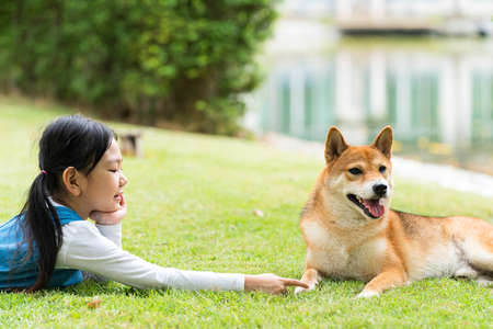 An Asian girl is playing with a dog in the park. Girl and Shiba inu dog.