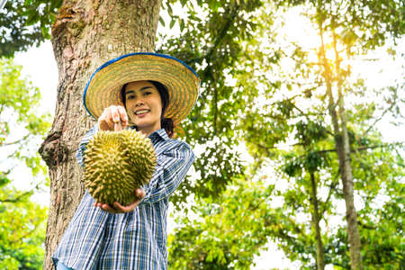 Female farmers showing durian in the durian orchard. Farmers show fruit in the garden.  Asian woman using smartphone in the durian orchard. Stockfoto - 152179058