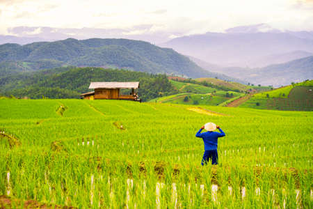 Farmers farming on rice terraces. Ban Pa Bong Piang Northern region in Mae Chaem District Chiangmai Province That has the most beautiful rice terraces in Thailand. Stockfoto