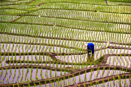 A farmer working in a beautiful field On a mountain range in Chiang Mai, Thailand Stockfoto