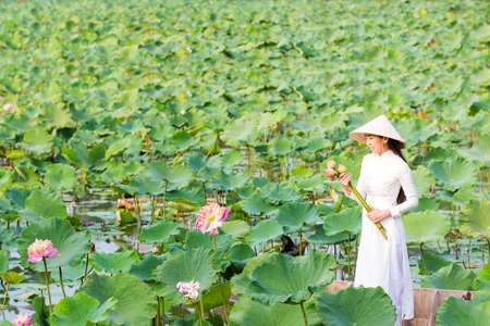 Vietnamese woman picking lotus flowers on a wooden boat Stockfoto