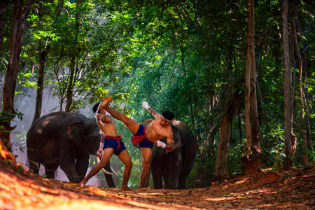 Crocodile kick strikes the tail. Thai boxers are fighting in a jungle with elephants. Boxing Fighting with elephants is the background. Surin, Thailand. Stockfoto