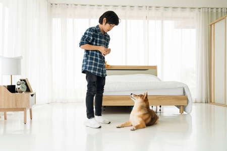An Asian boy and shiba inu dog. Asian boy are teaching and training dogs in bedroom.