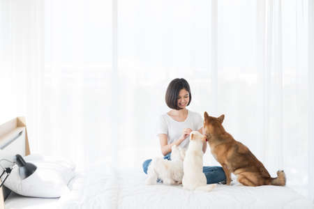 Young woman is playing with a Shiba Inu and Maltese dog in a bedroom in an apartment. An Asian girl is sitting with three dogs.