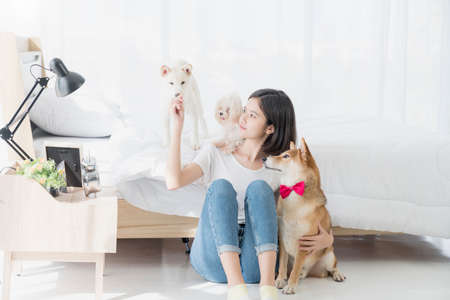 Pet Lover concept. Young woman and Maltese and Shiba inu dog. An Asian woman is resting with a Shiba Inu on bed in bed room. An Asian girl is sitting with three dogs. Stockfoto