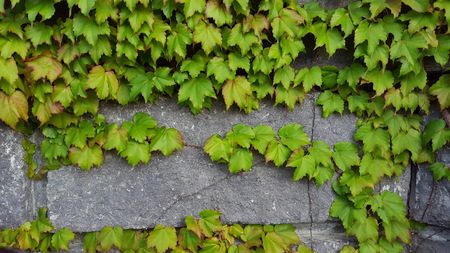 backgroud: gree leaves backgroud