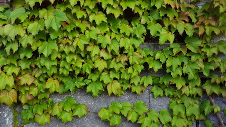 gree: gree leaves backgroud