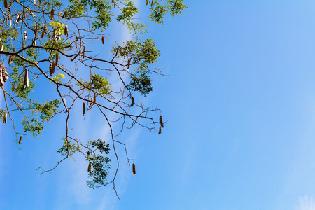 Man looking up in the sky and find that even an unfruitful tree is still growing and dont giving up its hope to survive, then he realized that he would never surrendered to his fate too. 版權商用圖片