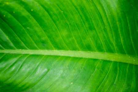 green lines: A lines on green leaf background.