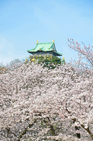 Sakura tree in the garden and Osaka Castle. Editorial