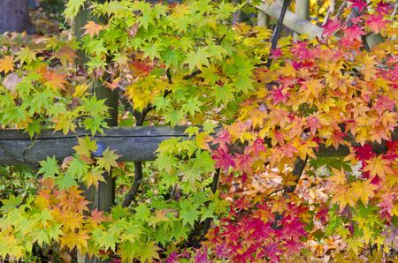 the season: All Colors in Autumn Season Stock Photo