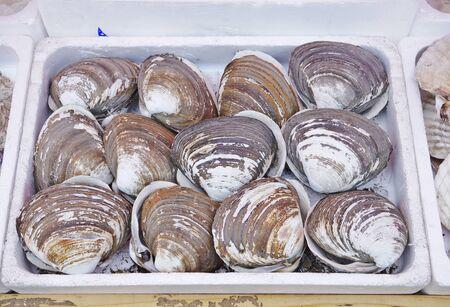 Shellfish in the Morning market, Japan.