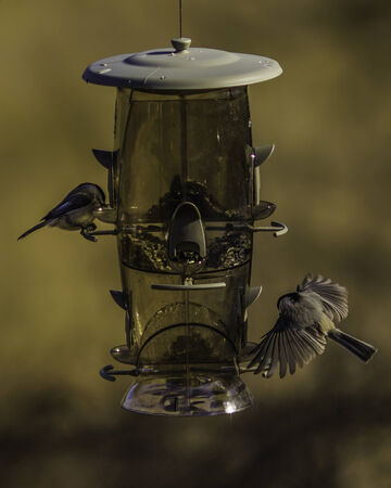 In-Bound  Bird feeder