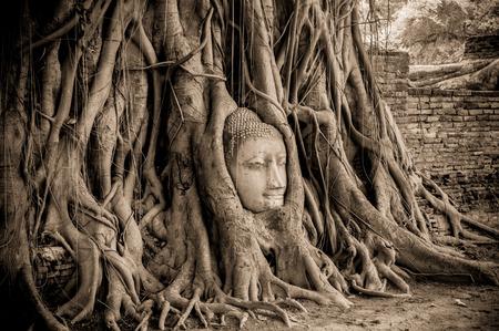 cabeza de buda: Cabeza de Buda en árbol  Foto de archivo