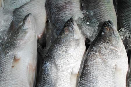 fish on ice: Fish on ice