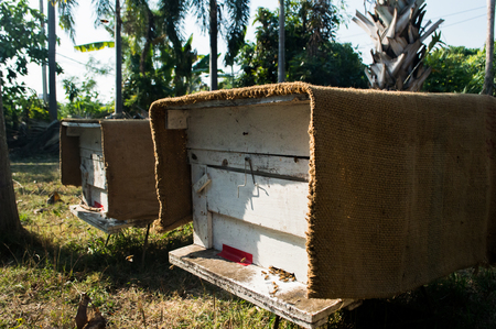 used: Wooden boxes used beekeeping
