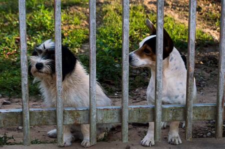 locked: Two dogs locked in the cage.