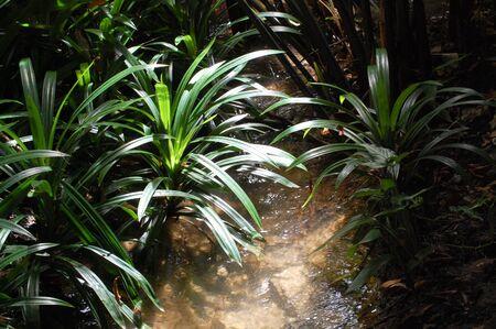 clear water: clear water stream in Maehongson,Thailand