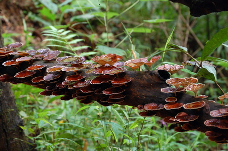 retention: Mushrooms in the rainy forest with some retention water after the rain. Stock Photo