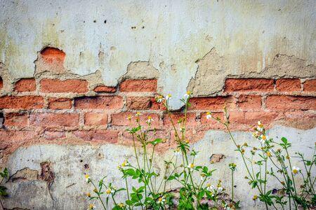 old brick wall: The old brick wall. Stock Photo